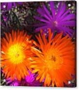 Orange And Fuchsia Color Flowers Acrylic Print