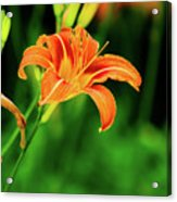 Orange And Green Acrylic Print