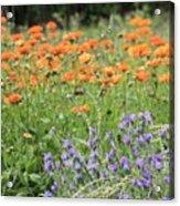Orange And Purple Dream Flowers Acrylic Print
