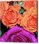 Orange And White With Pink Tip Roses Acrylic Print