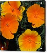 Orange And Yellow Flowers Acrylic Print