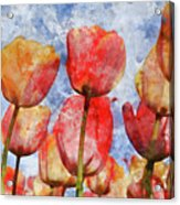Orange And Yellow Tullips With Blue Sky Acrylic Print