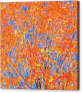 Orange Autumn Impression Acrylic Print