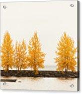 Orange Autumn Acrylic Print