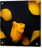 Orange Beauty 2 Acrylic Print