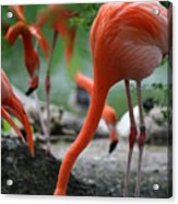 Orange Bird Acrylic Print