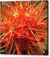 Orange Blast Acrylic Print
