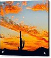 Orange Blossom Moments Acrylic Print