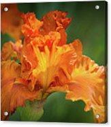 Orange Burst Acrylic Print