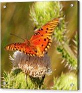 Orange Butterfly Acrylic Print