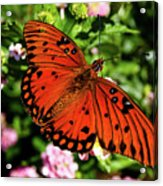 Orange Butterfly Acrylic Print by Valeria Donaldson