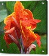 Orange Canna Art Acrylic Print