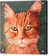 Orange Cat Acrylic Print