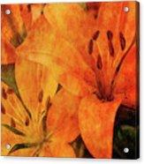 Orange Cluster 9225 Idp_2 Acrylic Print