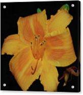 Orange Daylily Flower Blossom In A Garden Acrylic Print
