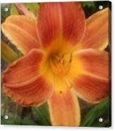 Orange Delight Acrylic Print