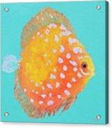 Orange Discus Fish With Purple Spots Acrylic Print