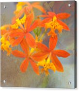 Orange Dream Acrylic Print