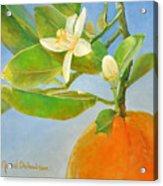 Orange en Coin Acrylic Print