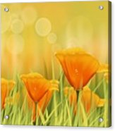 Orange Field Acrylic Print