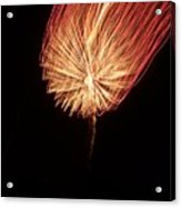 Orange Firework Acrylic Print