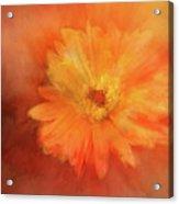 Orange Flower Energy Acrylic Print