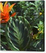 Orange Flower Longwood Gardens Acrylic Print