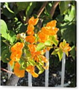 Orange Flower Acrylic Print