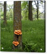Orange Fungi On A Tree Acrylic Print