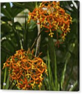 Orange Globes Acrylic Print