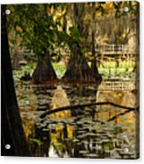 Orange Glow In The Forest Acrylic Print