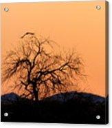 Orange Glow Sunset In The Desert Acrylic Print
