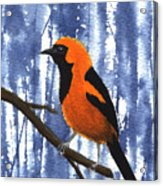 Orange-headed Oriole Acrylic Print