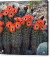 Orange Hedgehog Patch  Acrylic Print