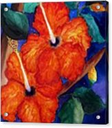 Orange Hibiscus Acrylic Print by Lil Taylor