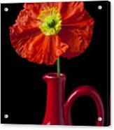Orange Iceland Poppy In Red Pitcher Acrylic Print