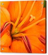 Orange II Acrylic Print