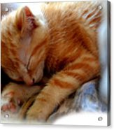 Orange Kitten Sleeping In Silk And Satin Acrylic Print