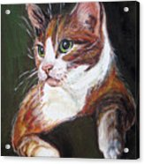 Orange Kitty Acrylic Print