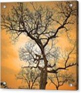 Orange Leopard Acrylic Print