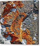 Orange Lichen Acrylic Print