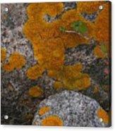 Orange Lichen On Granite Acrylic Print