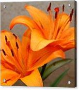 Orange Lilies 2 Acrylic Print