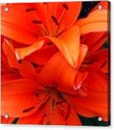 Orange Lily Closeup Digital Painting Acrylic Print
