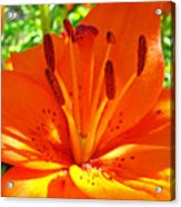 Orange Lily Flower Art Print Summer Lily Garden Baslee Troutman Acrylic Print