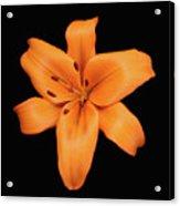 Orange Lily On Black Acrylic Print