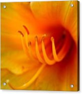 Orange Marmalade 2 Acrylic Print