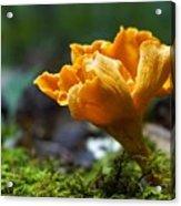 Orange Mushroom Flower On The Forest Floor Acrylic Print