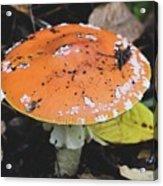 Orange Mushroom Acrylic Print