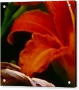 Orange Opening Acrylic Print
